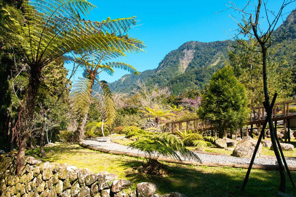 Xitou Nature education Area Taiwan